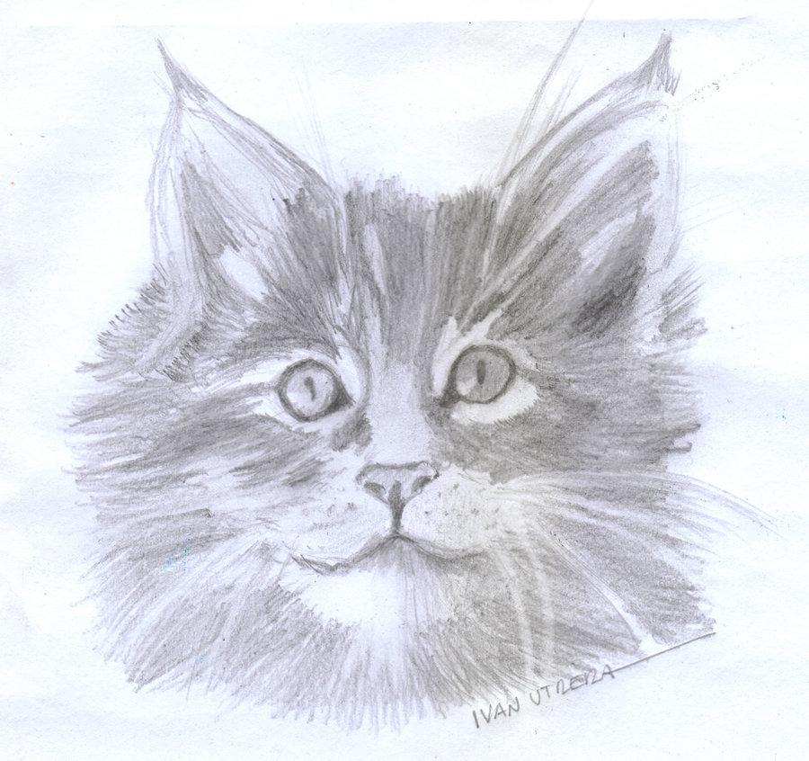 cat10_362292.jpg