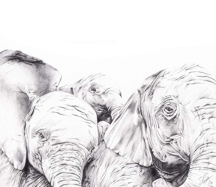 elefantes_lapiz_sobre_papel_ed_363515.jpg