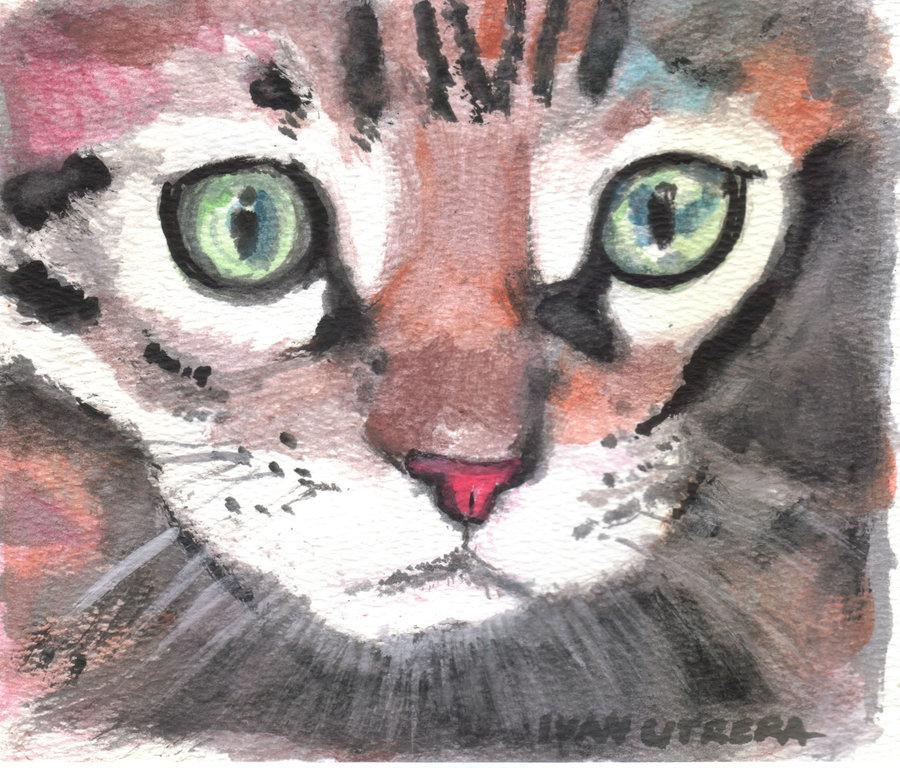 cat013_363703.jpg