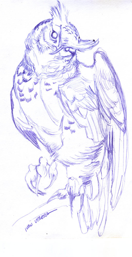 owl06_364071.jpg