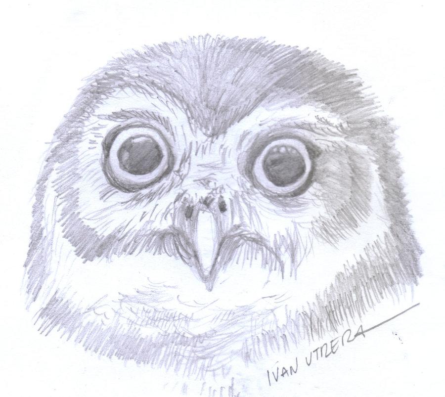 owl04_364491.jpg
