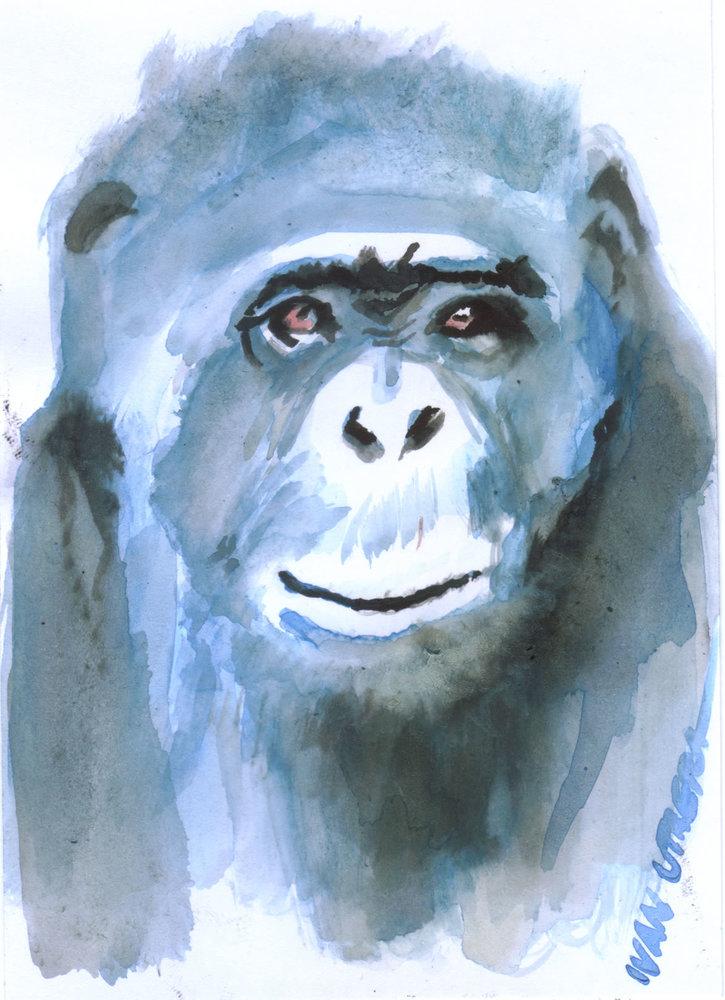 monkey06_367632.jpg