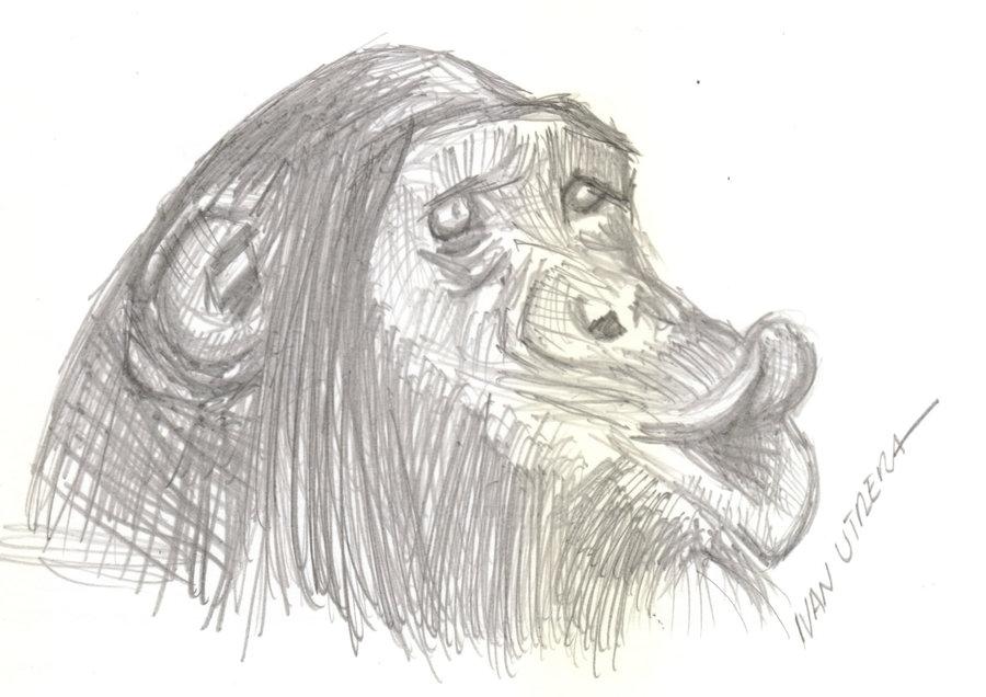 monkey05_367821.jpg