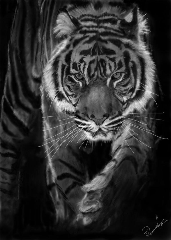 Crouching_Tiger_346128.jpg