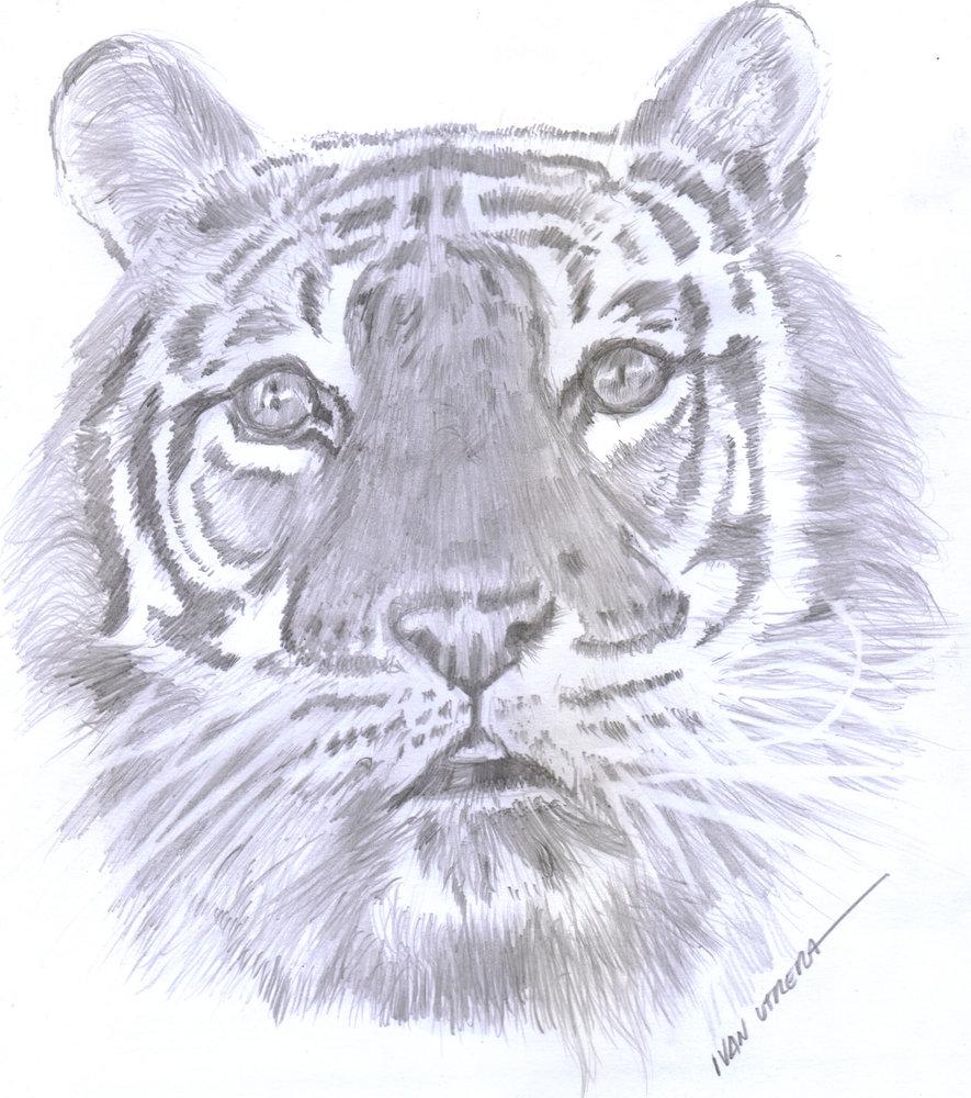 tiger06_346275.jpg