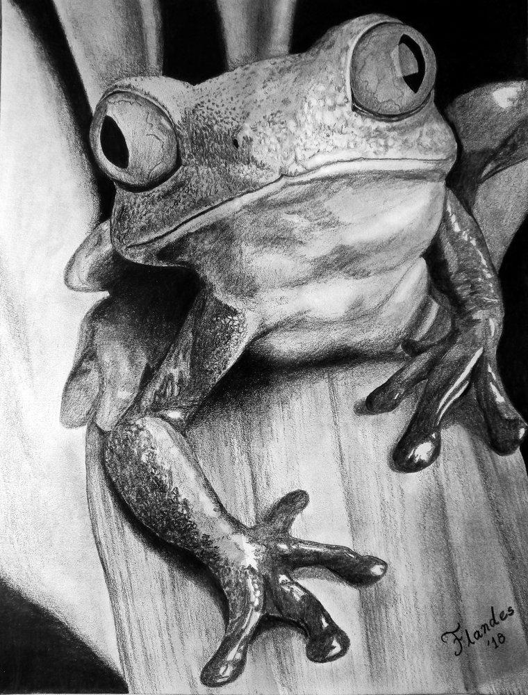 Frog_373947.jpg