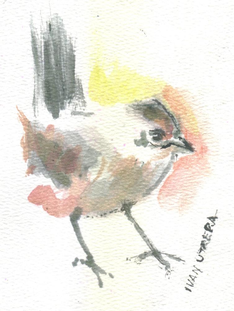bird19_346689.jpg