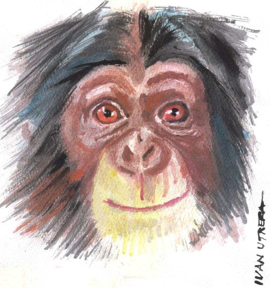 monkey04_376450.jpg