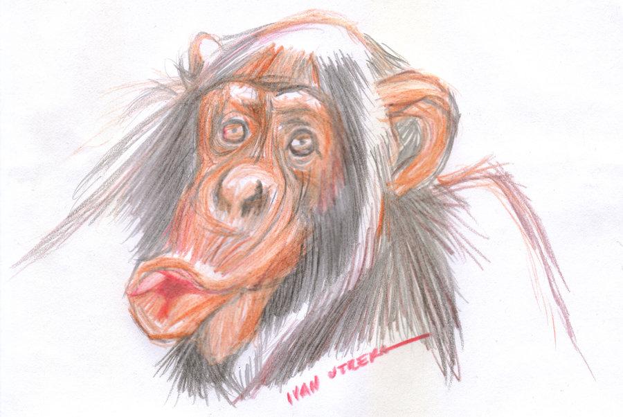 monkey03_376527.jpg