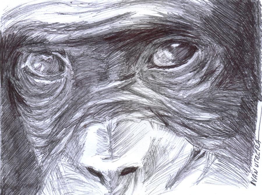 monkey02_376952.jpg