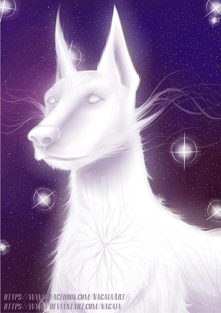 Galactic_Dog_JPG_379036.jpg