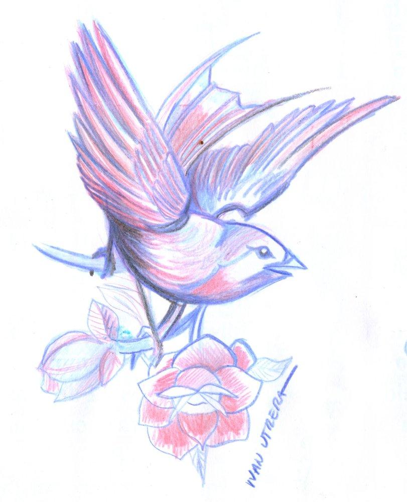 bird23_347266.jpg
