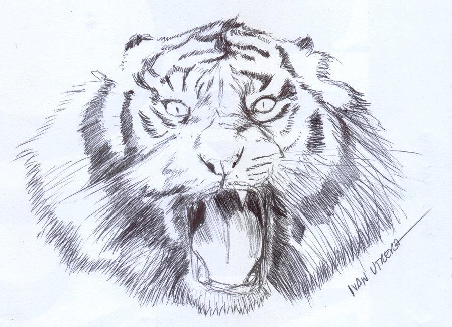 tiger_347332.jpg