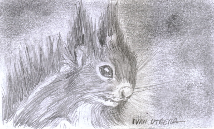 squirrel01_347397.jpg