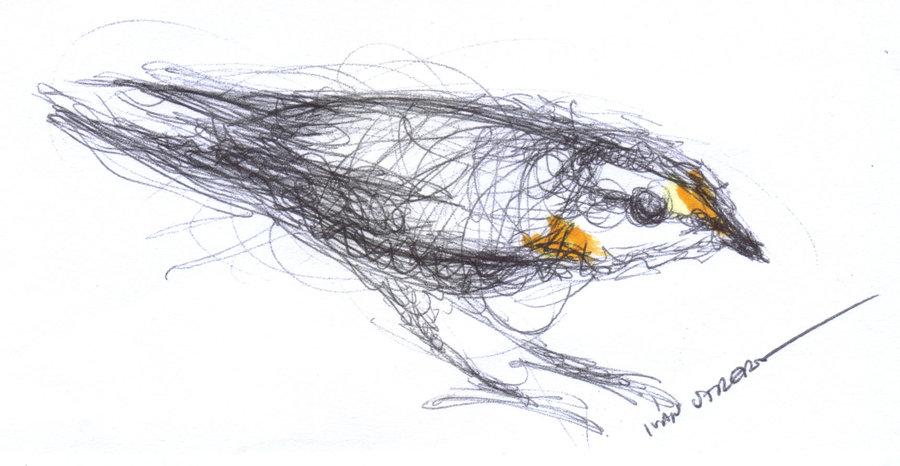 bird26_347617.jpg