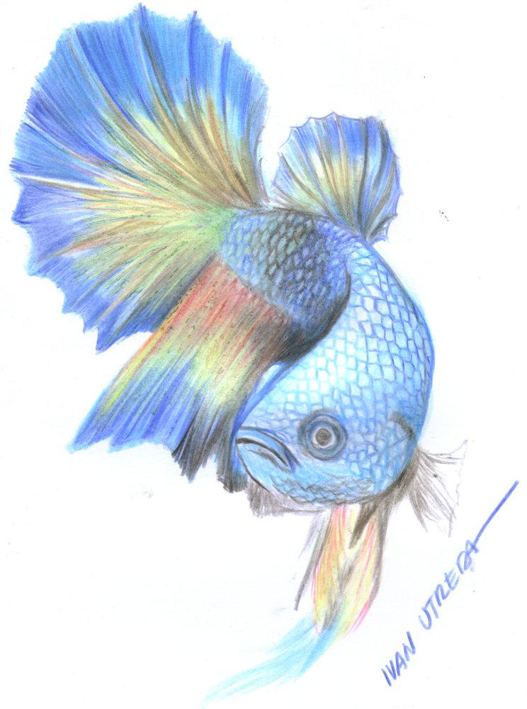 fish04_394146.jpg