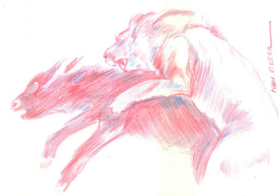 lion10_382244.jpg