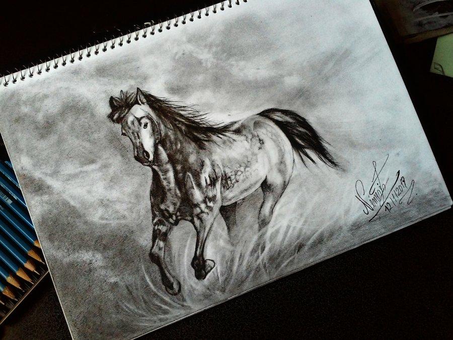 caballo_382322.jpg