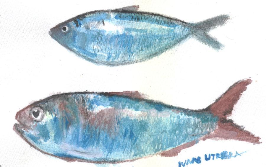 fish07_395562.jpg