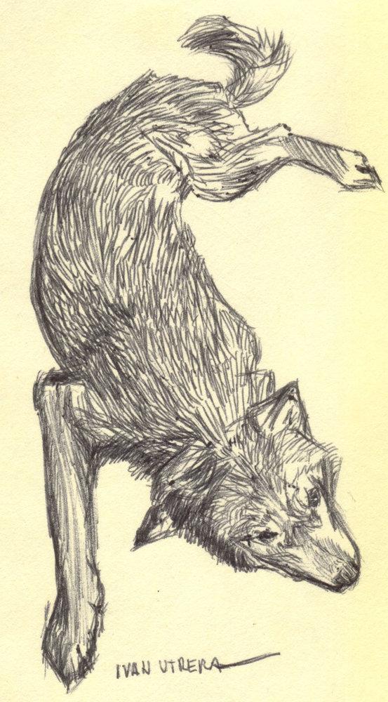 wolf_395879.jpg
