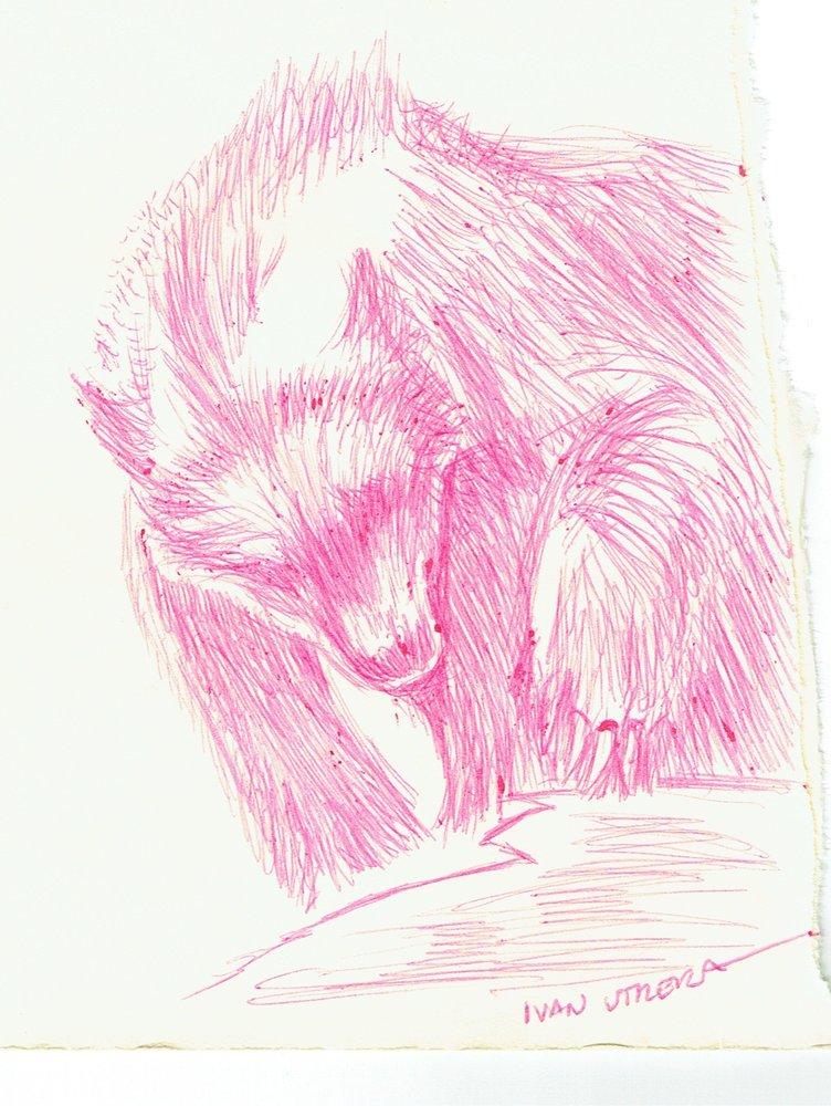 bear05_397471.jpg