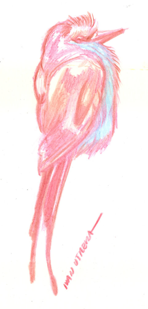 bird04_397983.jpg