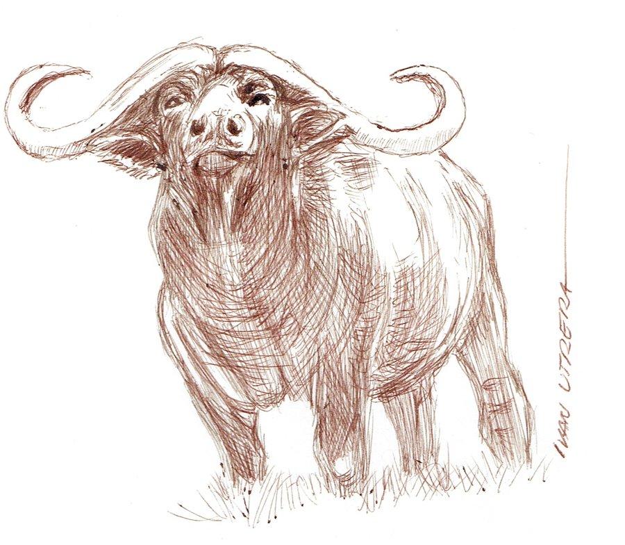 buffalo01_398185.jpg