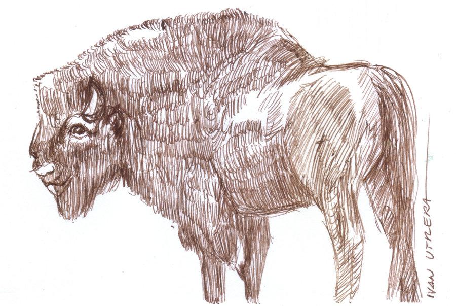 buffalo_398184.jpg