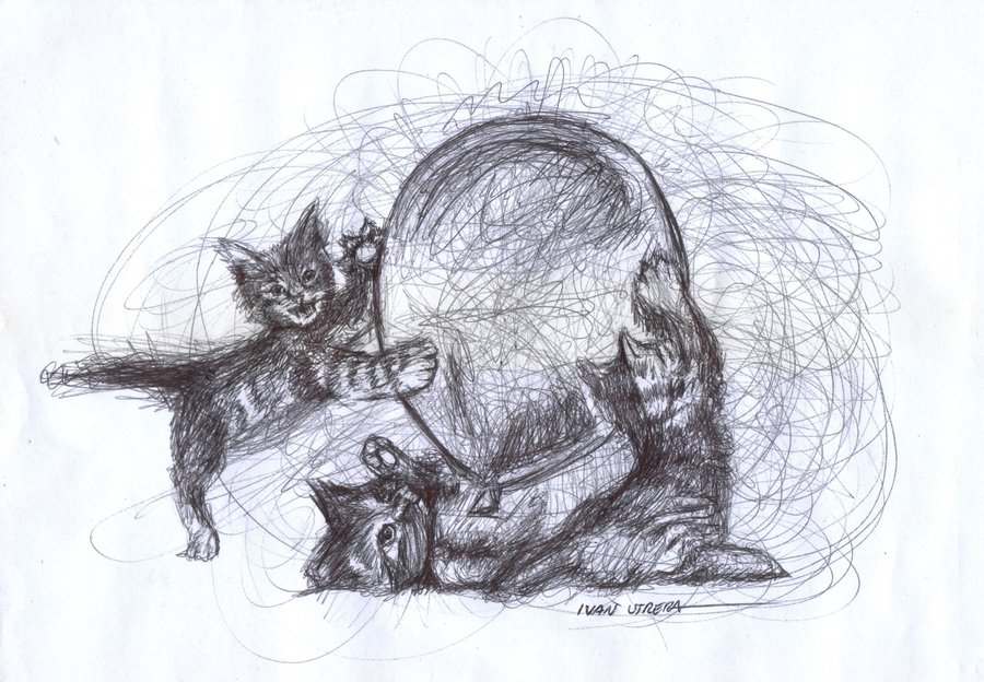 cat01_399808.jpg