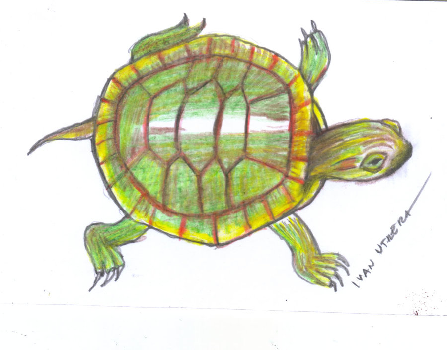 turtle05_400057.jpg