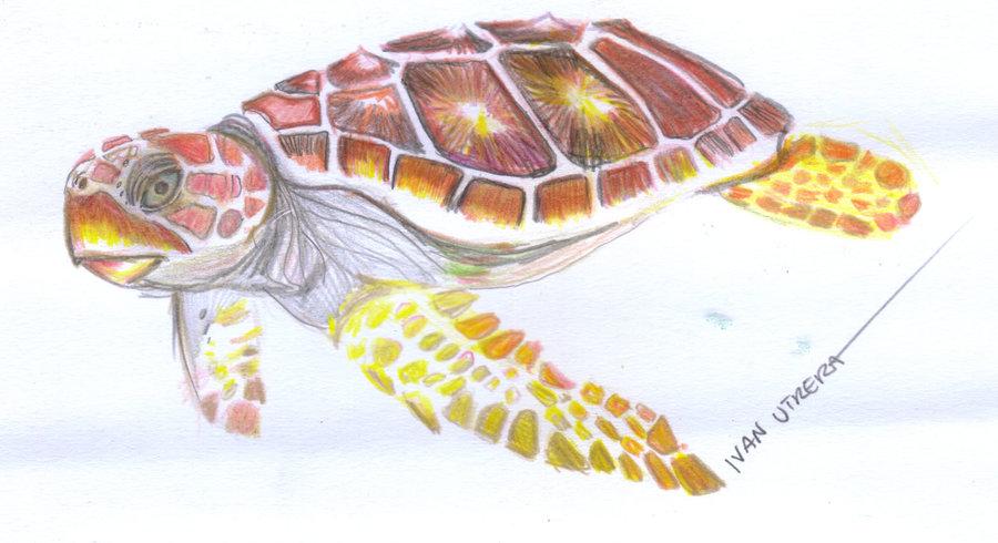 turtle04_400146.jpg