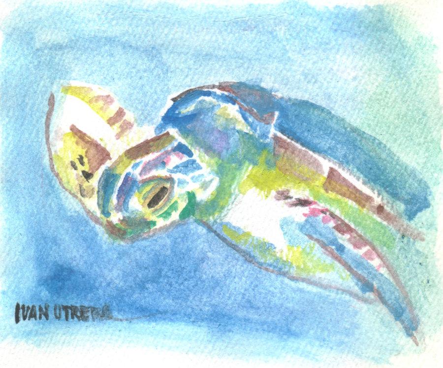 turtle02_400903.jpg