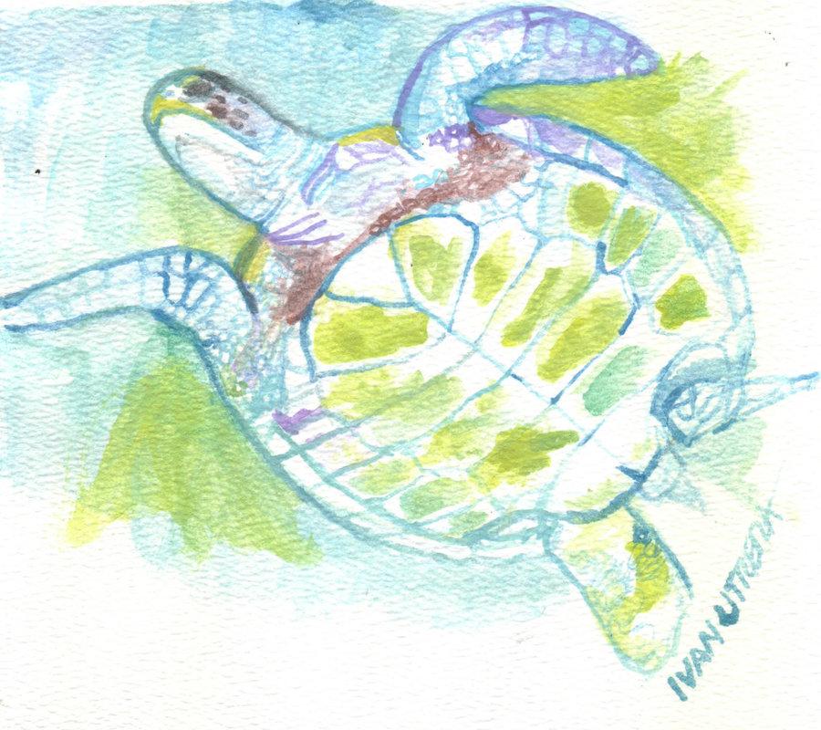 turtle_401157.jpg