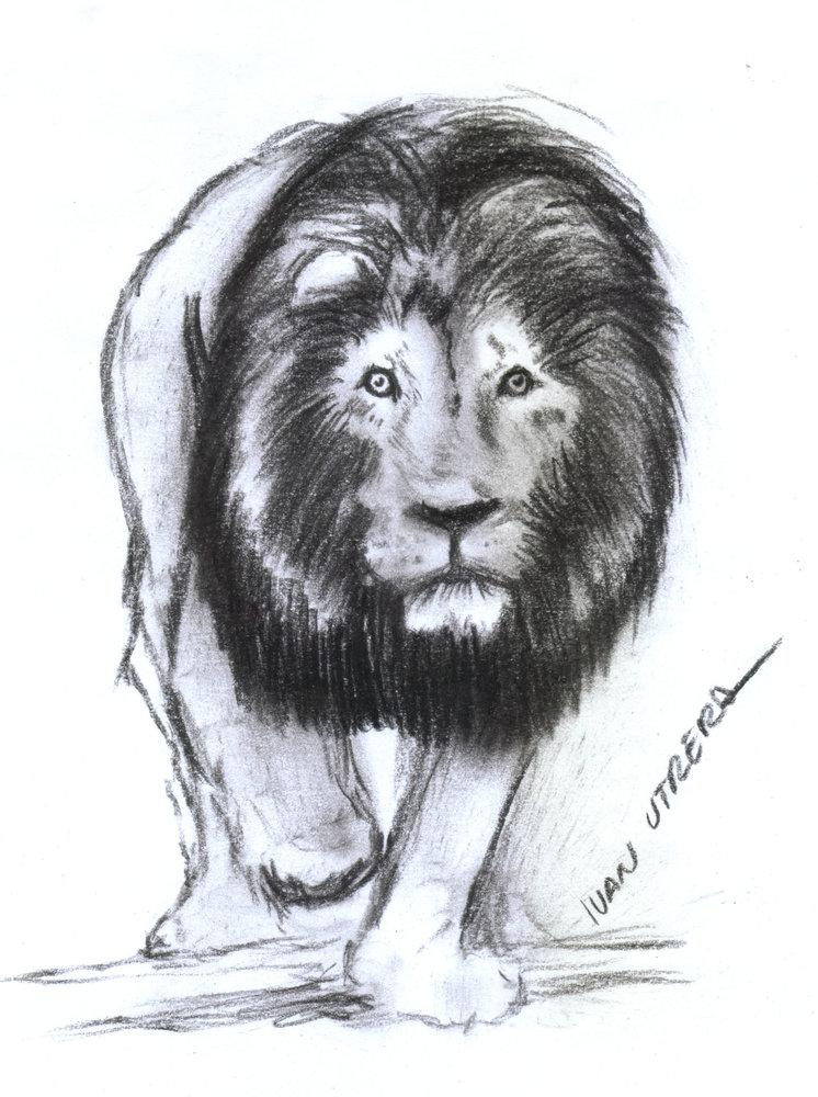 lion07_383092.jpg