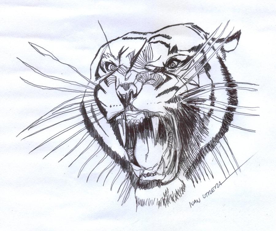 tiger20_403804.jpg