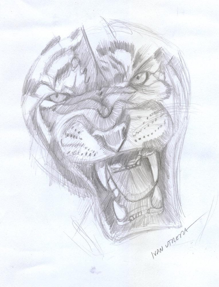 tiger18_404008.jpg