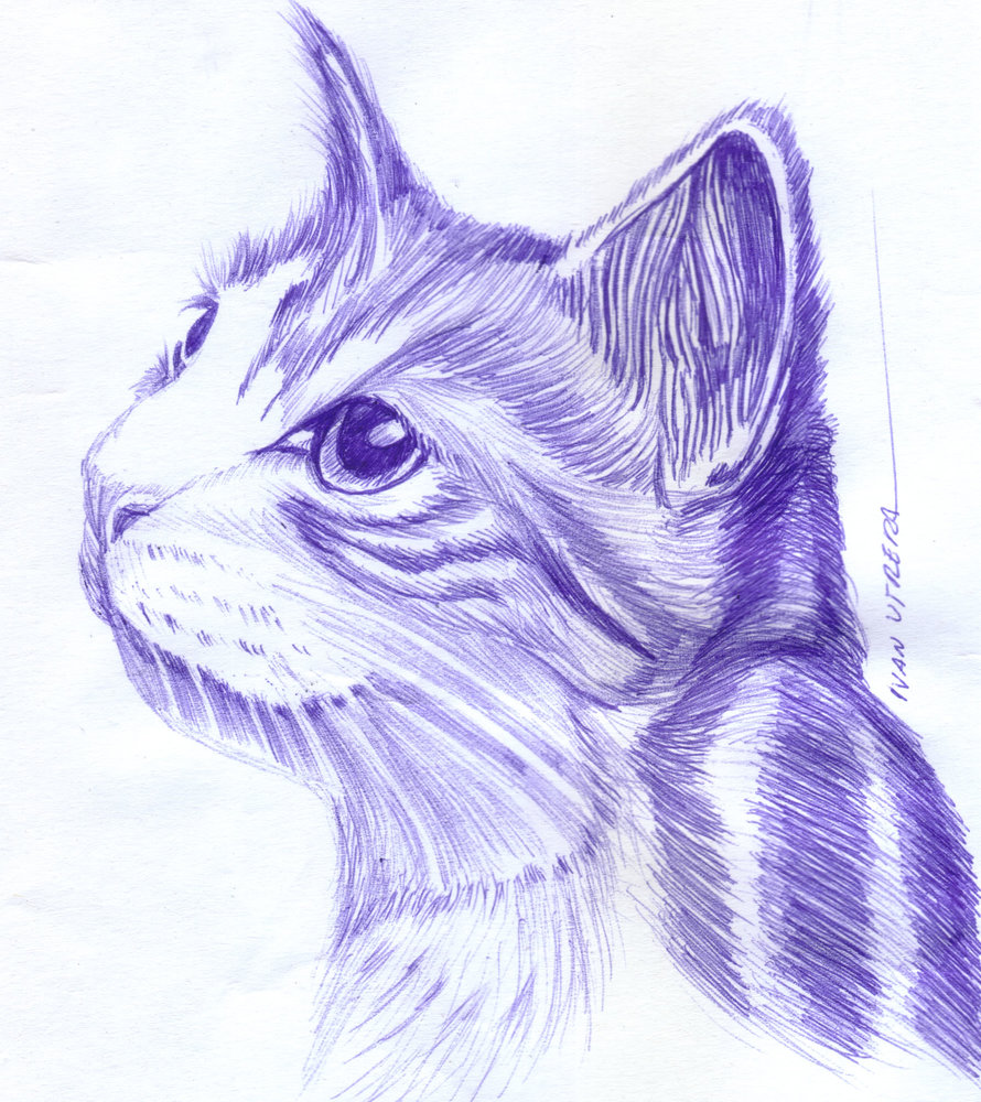 cat15_404865.jpg