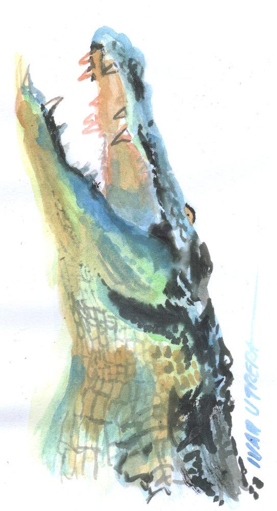 cocodrile01_408499.jpg