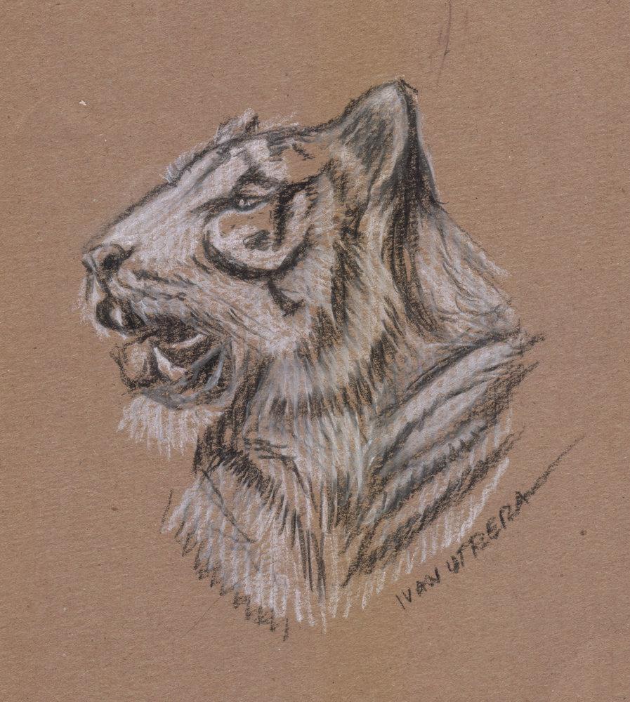 tiger06_408908.jpg