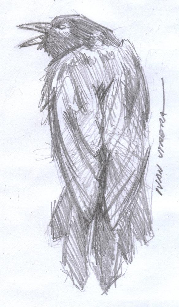 crow01_411369.jpg