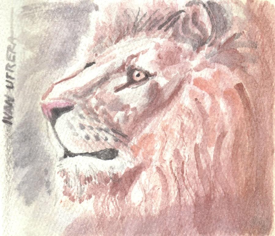 lion04_383738.jpg