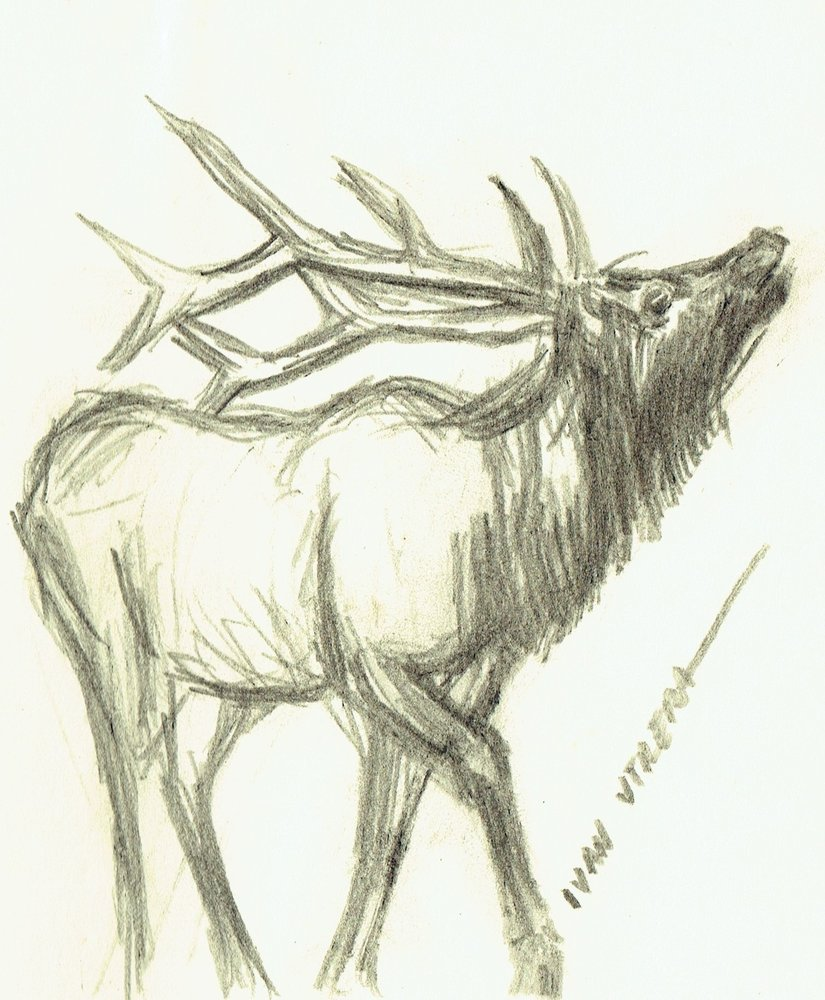 deer_411781.jpg