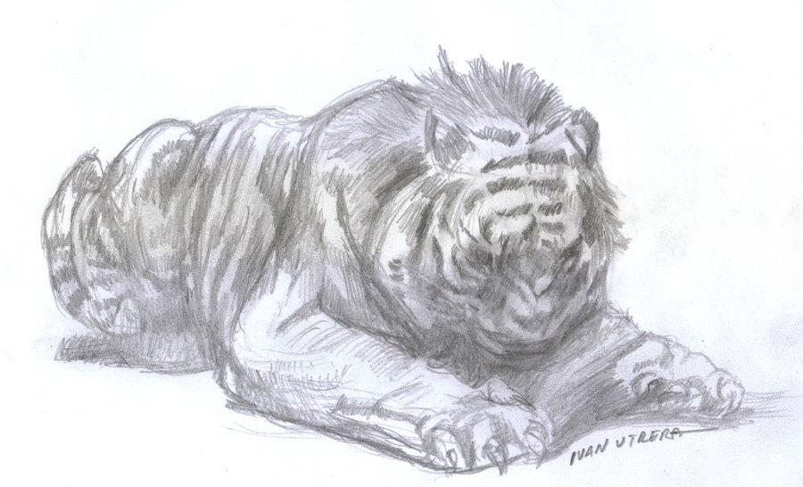 tiger01_412305.jpg