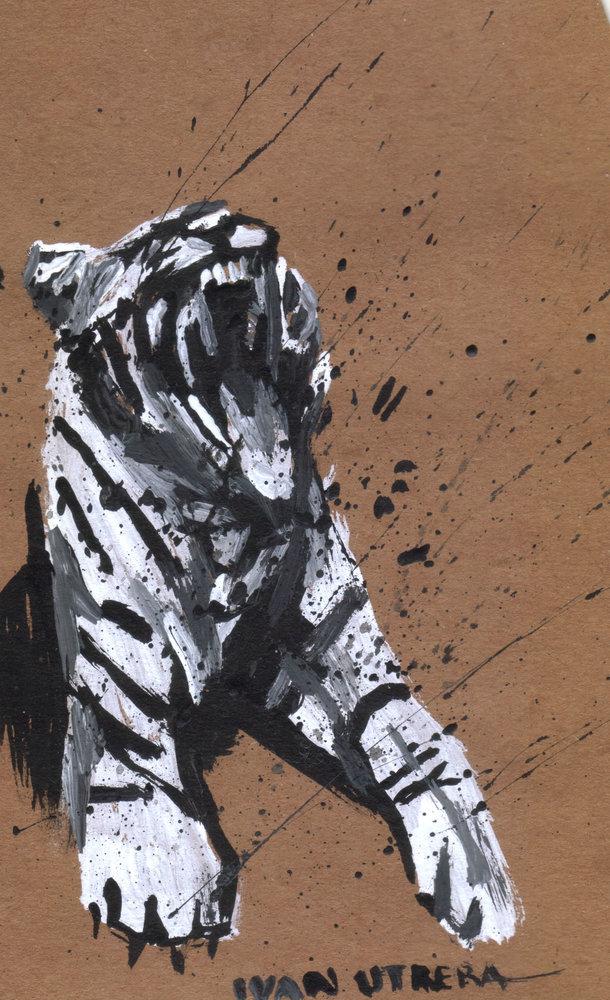 tiger02_412302.jpg
