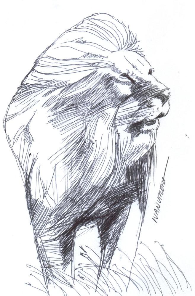 lion03_384218.jpg