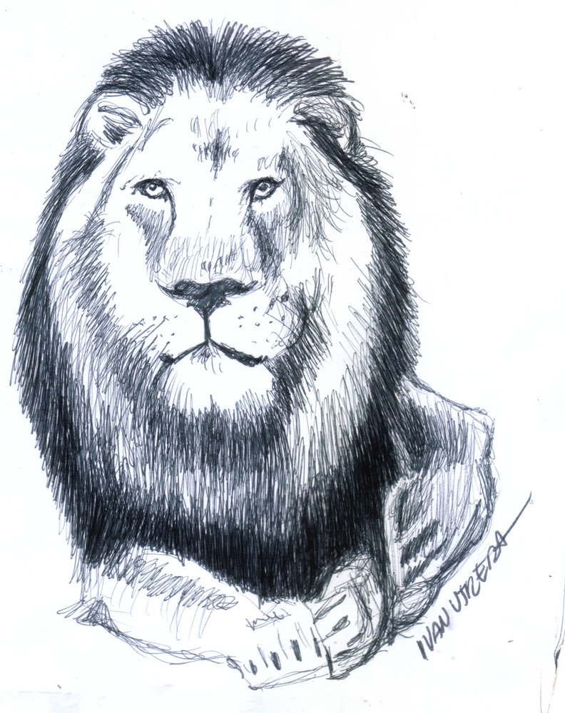 lion02_384340.jpg