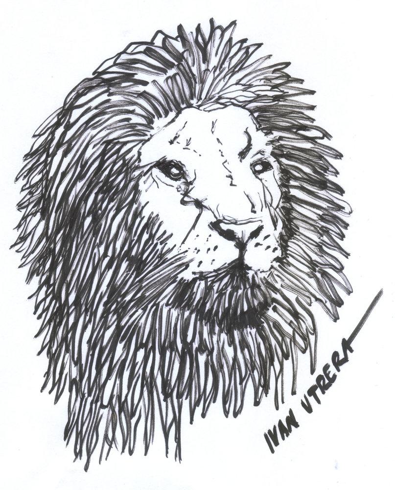 lion01_385252.jpg