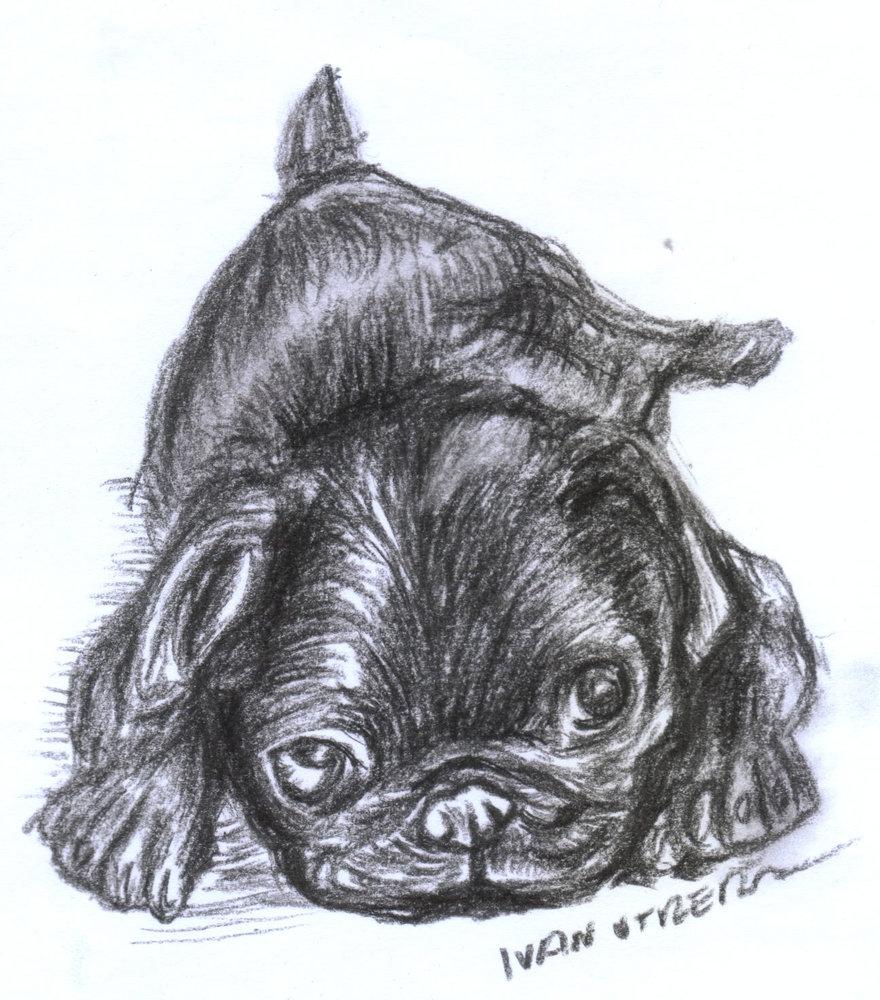 dog23_385436.jpg