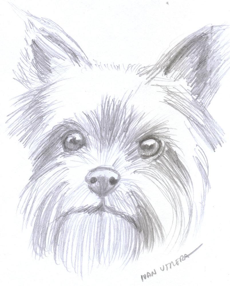 dog27_386374.jpg