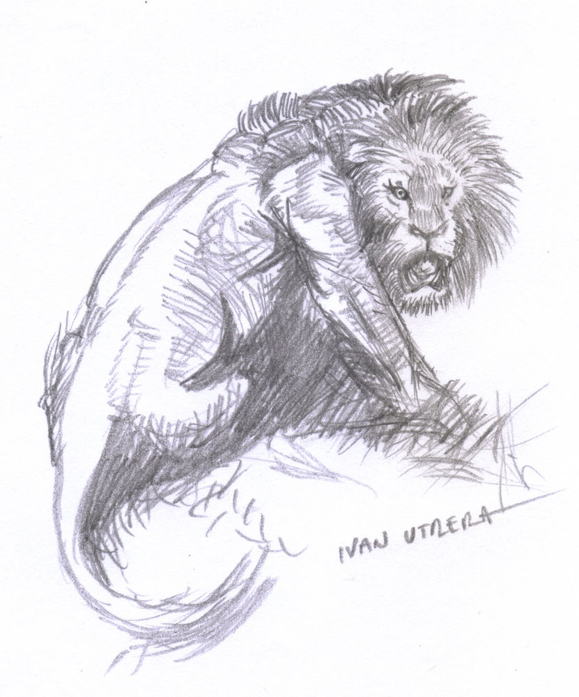 lion11_381750.jpg